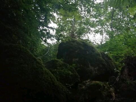 کلبه جنگلی چشمه ماسال