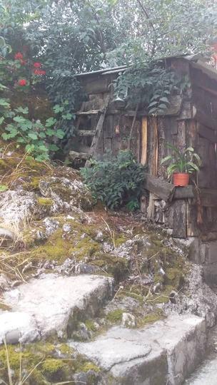 کلبه جنگلی (سخت سر )
