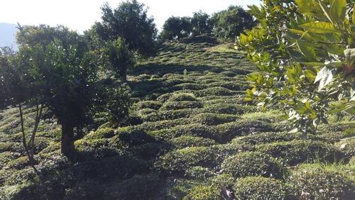 کلبه سنتی جنگلی ( دالخانی )