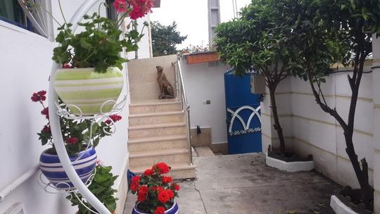 ویلا ساحلی دوبلکس لاکچری دنیا (4)کازینو