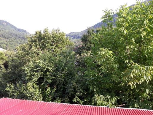ویلا استخردار سرپوشیده  در جنگل دالخانی