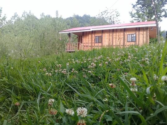 بومگردی کلبه جنگلی باغ سعدی اتاق یک